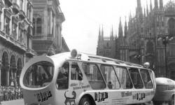 Il gatto selvatico a Milan - foto Archivio Eni