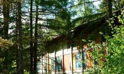 Nel bosco alla Colonia, tra i padiglioni